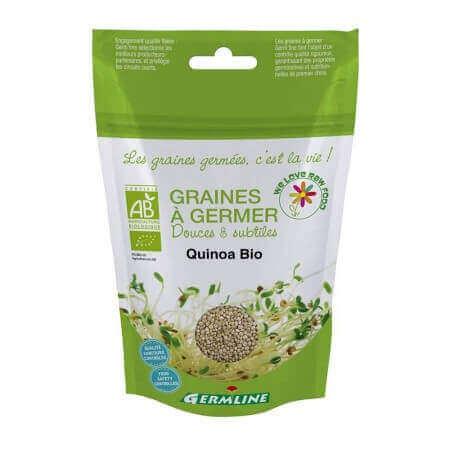 Graines à germer Quinoa