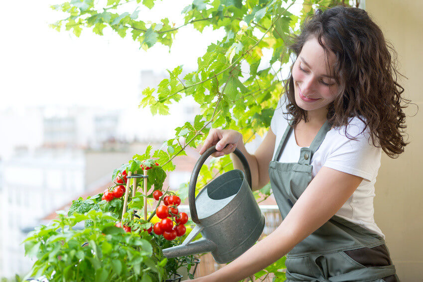 Comment cultiver des légumes sans jardin?