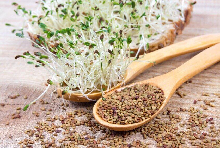 Conseil de Bastien : Bien conserver ses graines germées