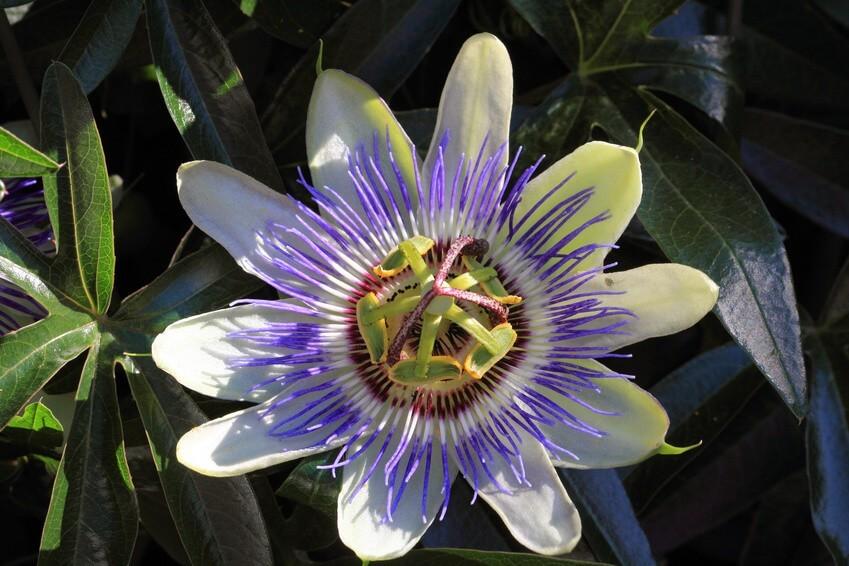 Conseil de Bastien : comment favoriser le sommeil par les plantes