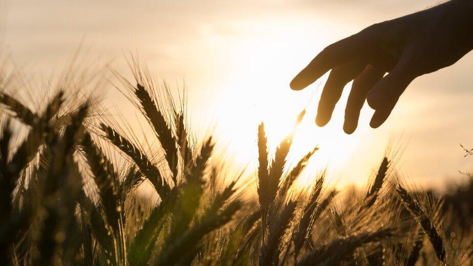 Avec l'AMAP, savourez des aliments sains cultivés par des fermiers locaux