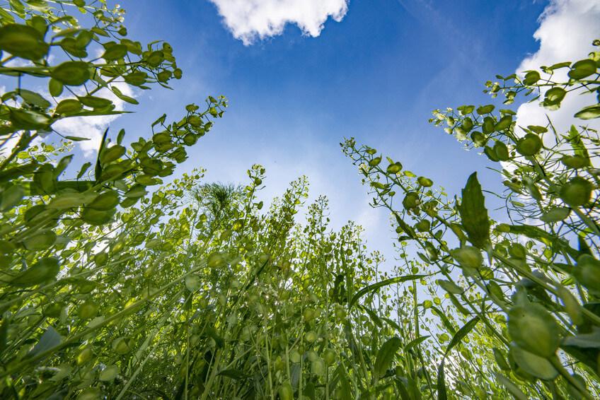 Comment se mettre au vert et booster sa santé avec l'ortie?