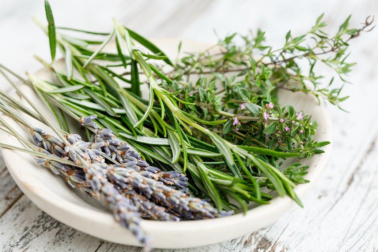 Herbes aromatiques au déshydrateur : boostez toutes vos recettes!