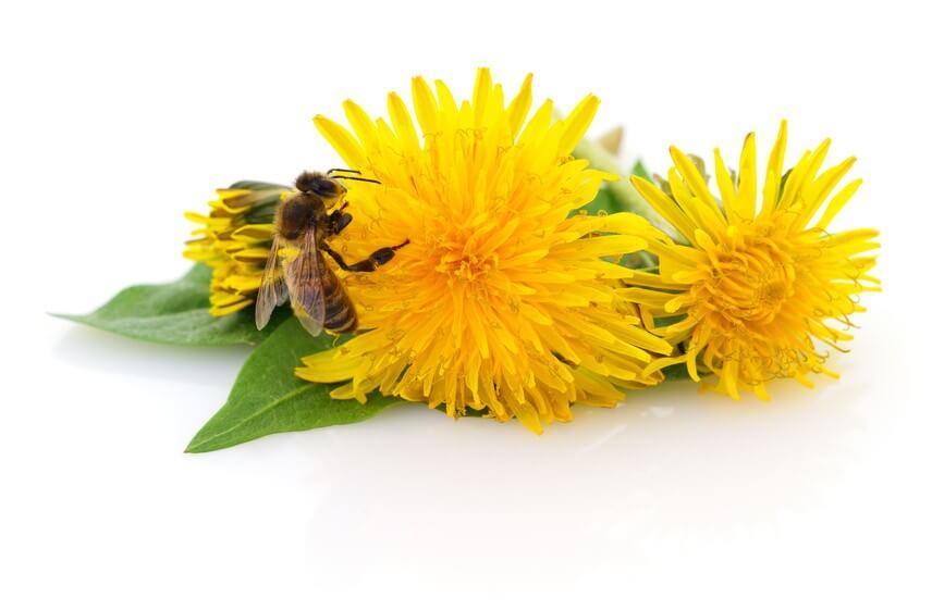 Pour repousser les insectes? Fleurissez votre potager!