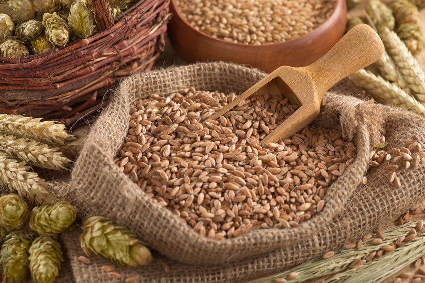 Les céréales, pour faire le plein de glucides et de protéines