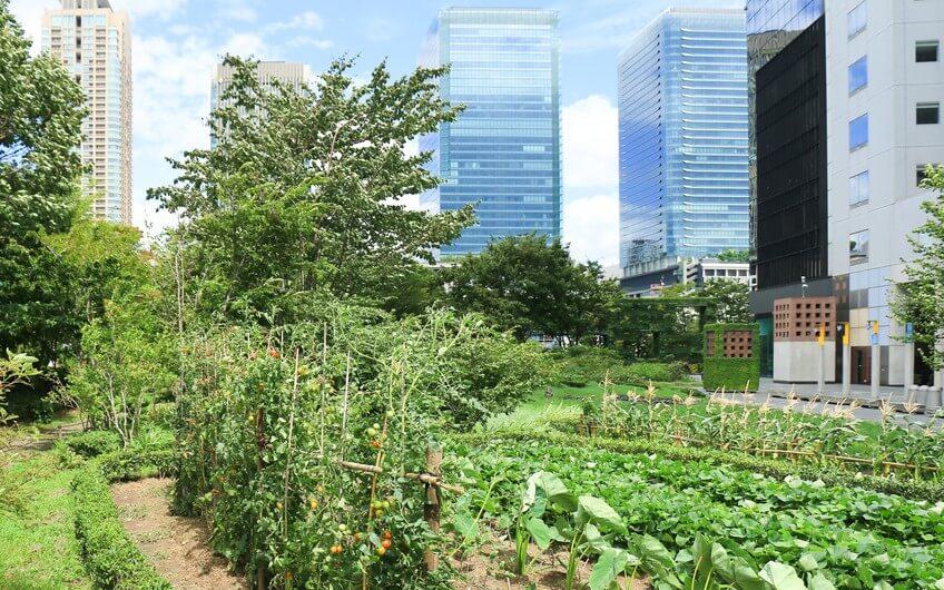 Des potagers partagés à l'Incredible Edible, retour à la culture du partage