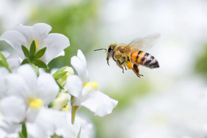 Conseil de Bastien pour semer des plantes mellifères au jardin