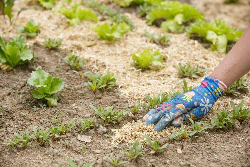 Mon potager en permaculture : quelques techniques de base!