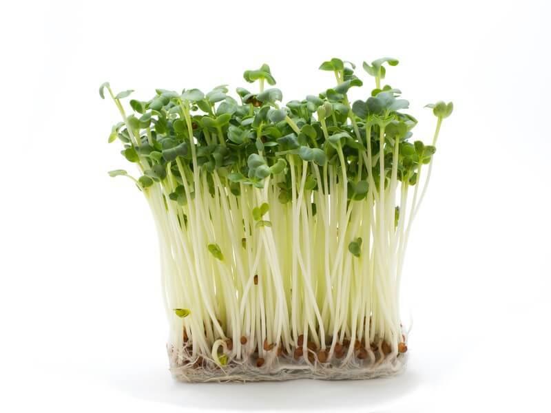 Les conseils de Bastien : Un germoir pour graines germées