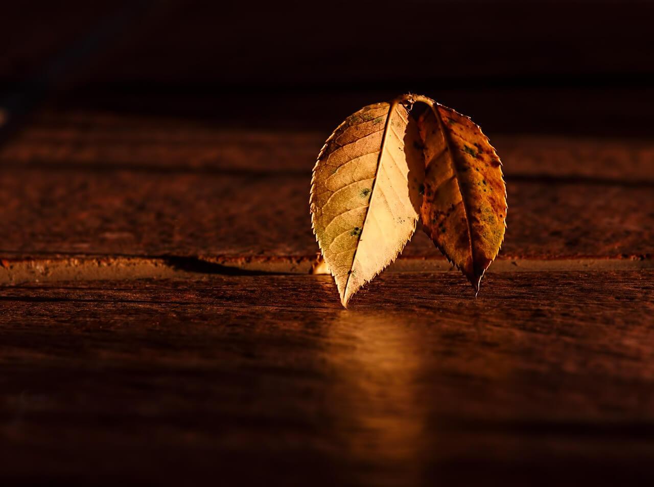 3 astuces naturelles pour une belle peau en automne