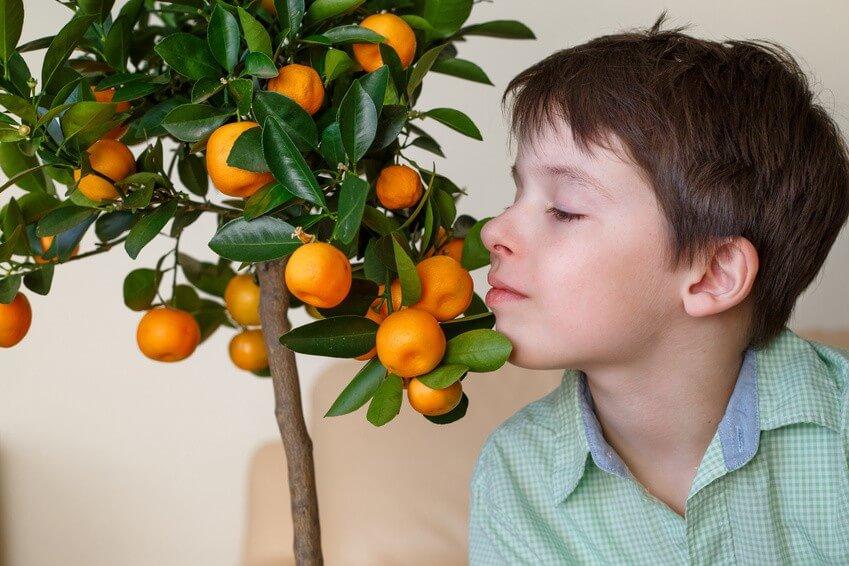 Planter des arbres fruitiers en appartement, c'est possible!