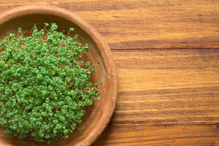Le top cinq des graines germées pour leurs bienfaits nutritifs