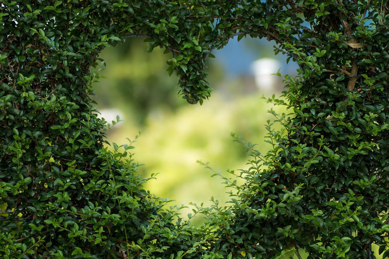 Conseil de Bastien : je soigne ma déprime avec les plantes!